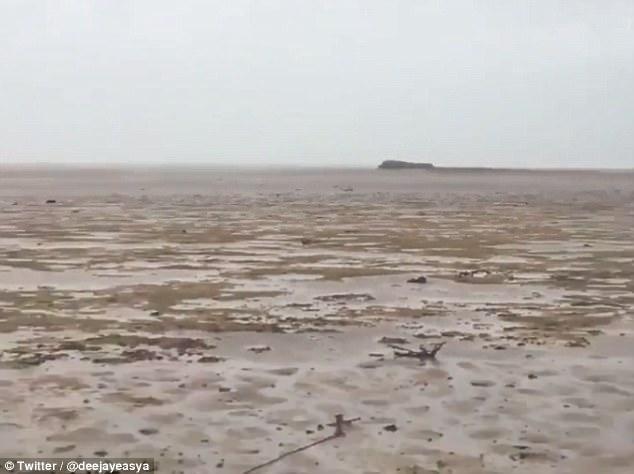 Siêu bão khiến nước rút sạch, lợn biển đen đủi mắc cạn vì không chạy kịp - Ảnh 3.