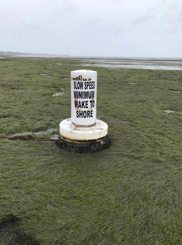 Siêu bão khiến nước rút sạch, lợn biển đen đủi mắc cạn vì không chạy kịp - Ảnh 5.