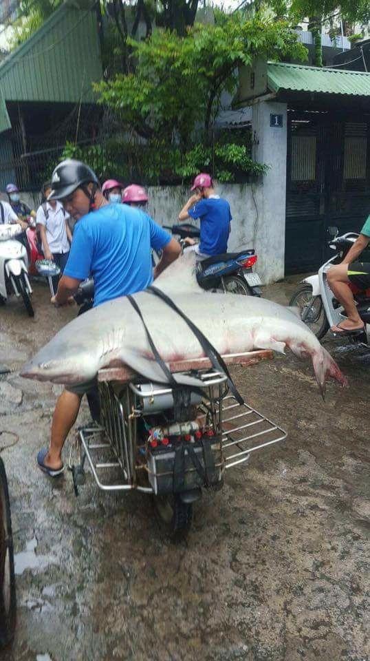Bắt được cá mập trên vùng biển tỉnh Quảng Ninh? - Ảnh 2.