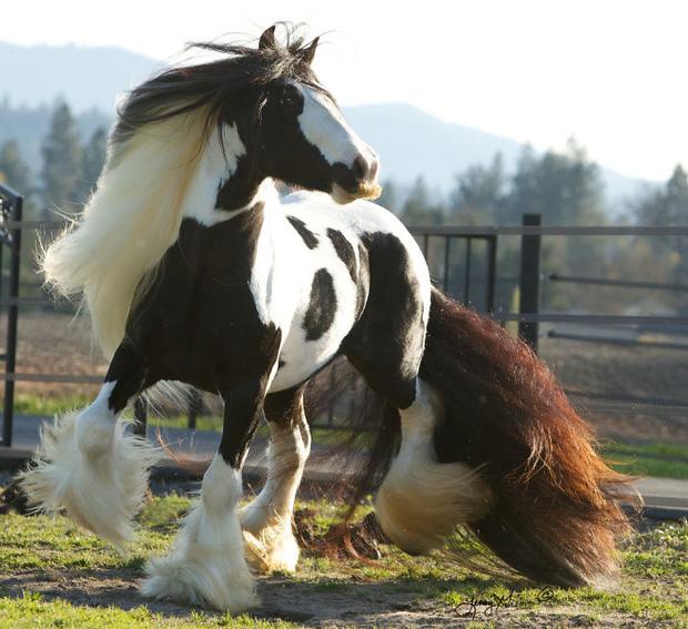 14 chú ngựa trông thật menly khi mọc râu - Ảnh 2.