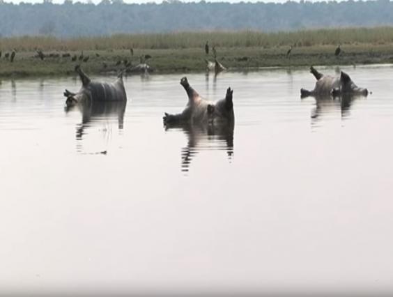 Hơn 100 con hà mã chết trương phềnh ở Namibia: Khoa học phát hiện nguyên nhân đáng sợ! - Ảnh 1.