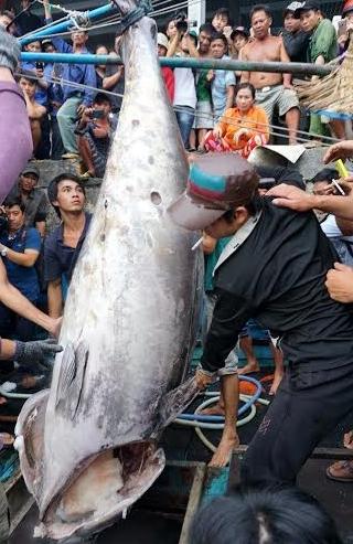Về Hòn Rớ nghe chuyện câu cá ngừ đại dương - Ảnh 3.