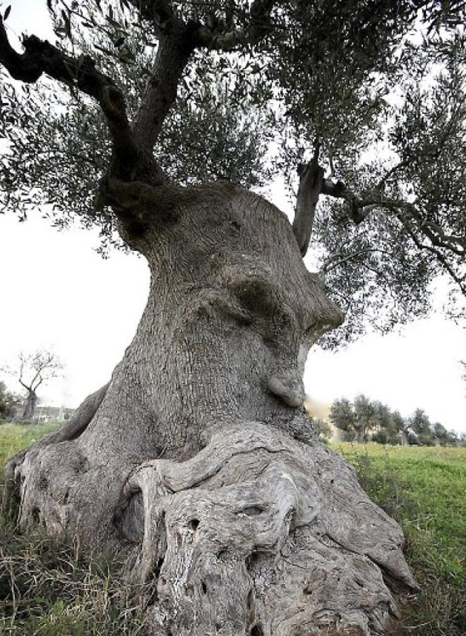 18 hình ảnh khiến bạn phải giật mình khi nhìn vào những cây cổ thụ - Ảnh 1.