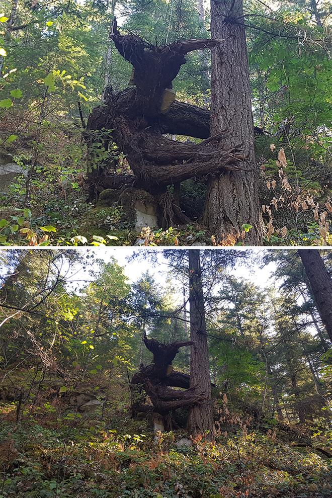 18 hình ảnh khiến bạn phải giật mình khi nhìn vào những cây cổ thụ - Ảnh 2.