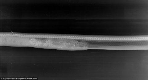 Cá sấu Mỹ bị trăn Miến Điện nuốt chửng - Ảnh 4.