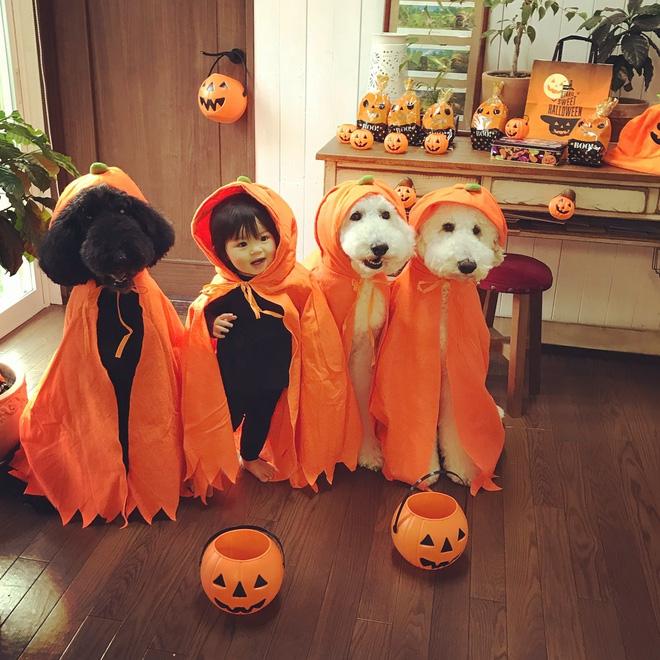 Loạt ảnh hóa trang Halloween hoành tráng nhất mạng xã hội của bé gái Nhật và những người bạn thú cưng - Ảnh 2.