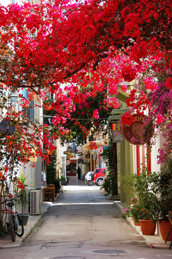 Những con đường phủ đầy hoa tươi như trong truyện cổ tích - Ảnh 1.