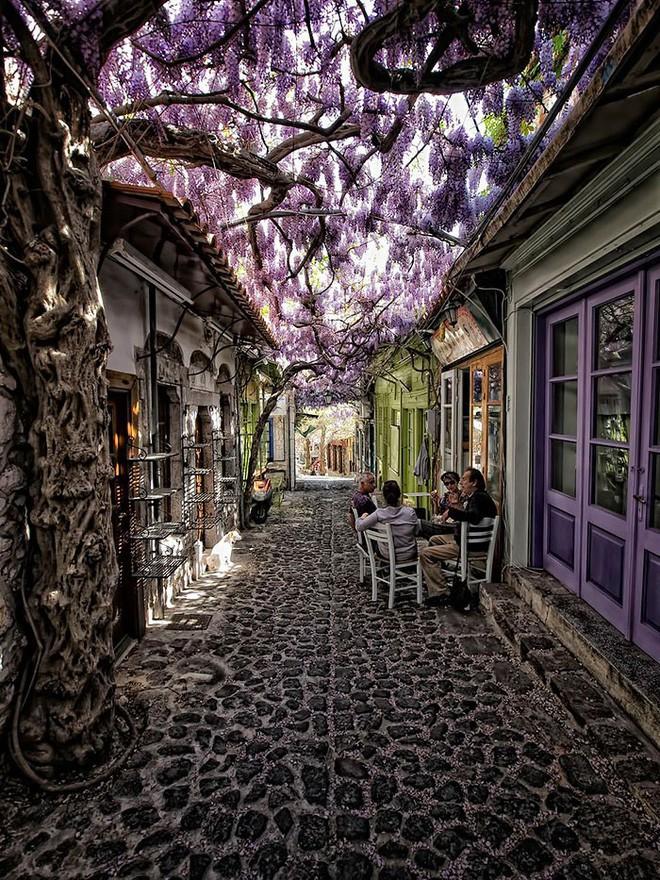 Những con đường phủ đầy hoa tươi như trong truyện cổ tích - Ảnh 2.