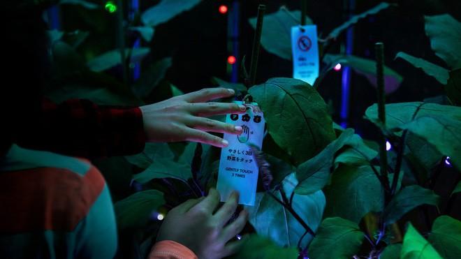 """Nông dân Nhật Bản giới thiệu dàn nhạc """"kỹ thuật số"""" từ rau củ đầu tiên trên thế giới - Ảnh 2."""