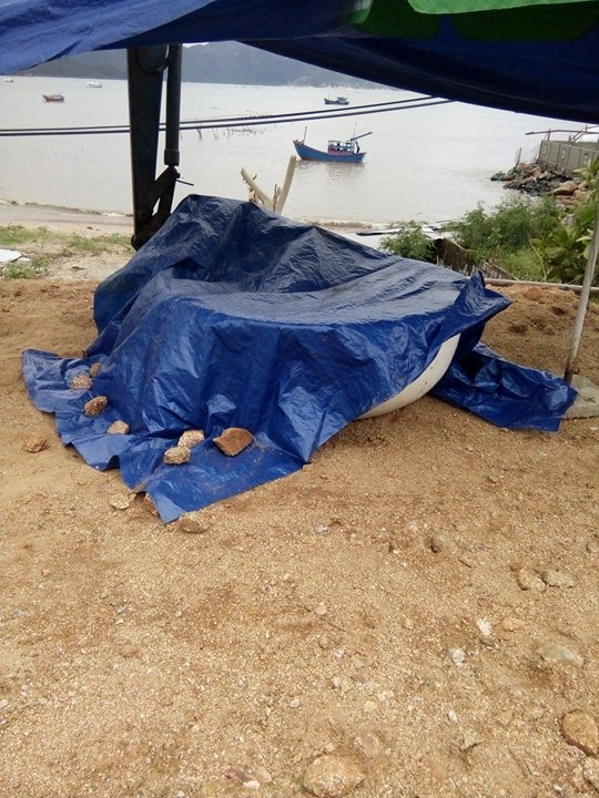 Nhiều thi thể trôi dạt được đưa vào bờ sau bão số 12 - Ảnh 1.