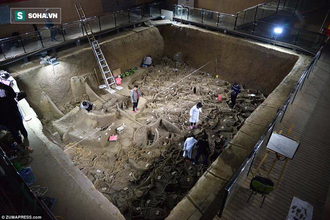 Bí ẩn cổ mộ 2.400 năm chứa hơn 100 xác ngựa ở Trung Quốc - Ảnh 1.
