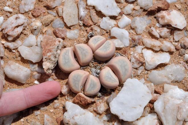 Ai cũng tưởng đây là những viên đá kỳ dị nhưng sờ tận tay mới biết sự thật bất ngờ - Ảnh 2.