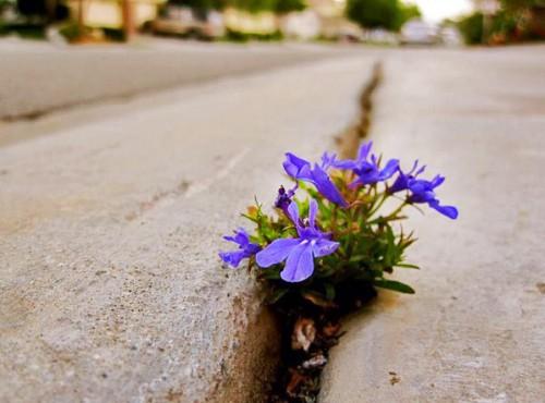 Chuyện chiếc bình bị nứt và bài học sâu sắc: Đằng sau những thứ tồi tệ nhiều khi là điều tuyệt vời - Ảnh 2.