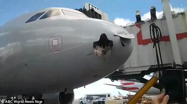 Bị con chim lớn đâm thủng đầu, máy bay vẫn hạ cánh an toàn - Ảnh 2.