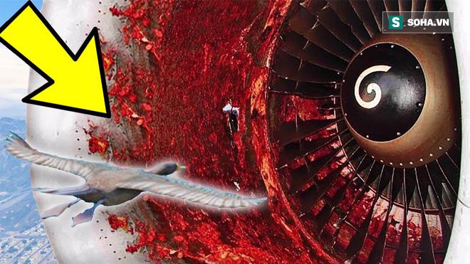 Đừng tưởng bạn đã biết: Một con chim nhỏ cũng khiến hàng không Mỹ mất 1,2 tỷ USD - vì sao? - Ảnh 1.