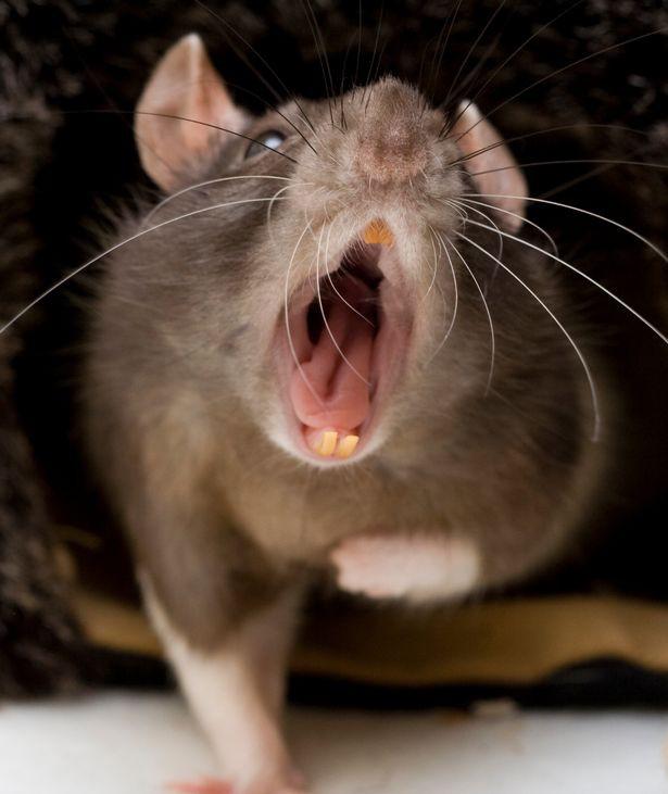 Bí ẩn con tàu ma trôi dạt vào bờ biển Mỹ, có thể đã bị chuột ăn thịt xâm chiếm - Ảnh 3.
