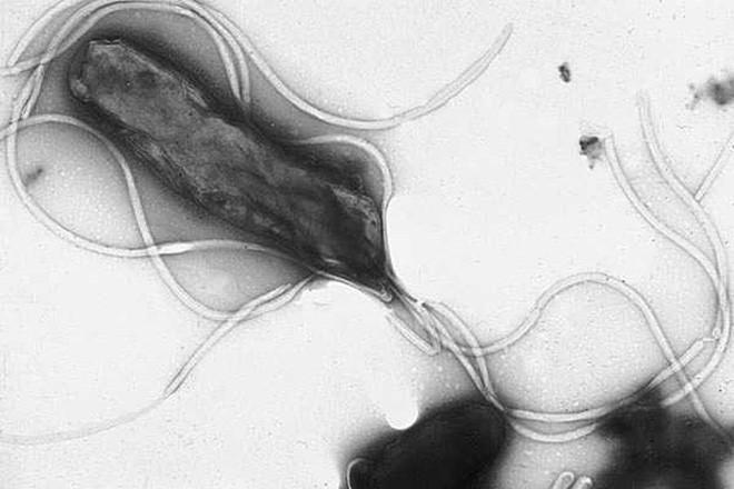 Chín loại vi khuẩn kháng kháng sinh nguy hiểm nhất - Ảnh 2.