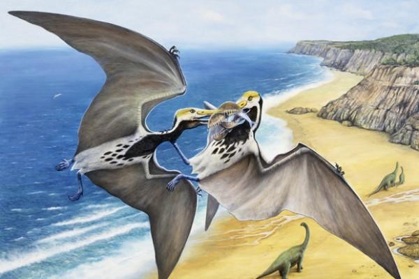 Tìm thấy 215 hoá thạch trứng thằn lằn bay còn nguyên vẹn - Ảnh 2.