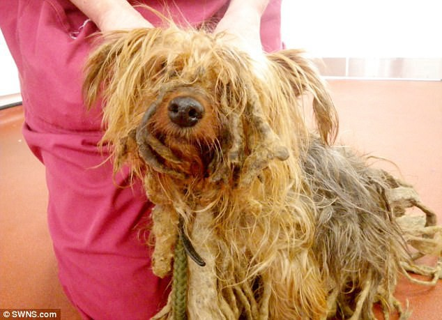 Chú chó không được xén lông suốt 13 năm, người chủ bị phạt cả đời không được nuôi động vật - Ảnh 1.