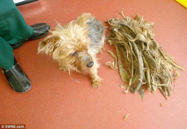 Chú chó không được xén lông suốt 13 năm, người chủ bị phạt cả đời không được nuôi động vật - Ảnh 2.