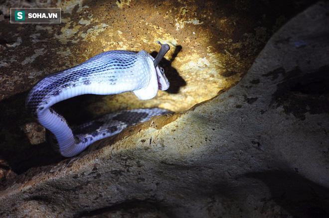 Thâm nhập hang sâu đáng sợ bậc nhất thế giới: Cơn ác mộng thực sự của người sợ rắn - Ảnh 8.