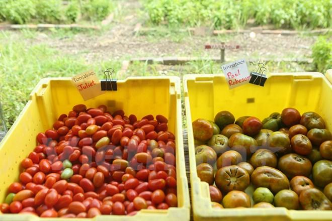 Bài 4: Trang trại cộng đồng giúp người Mỹ giải bài toán thực phẩm sạch - Ảnh 12.