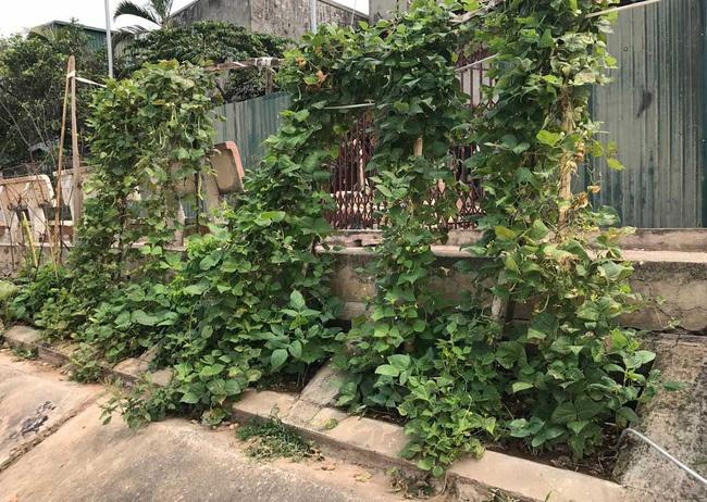 Khoét lỗ bê tông trồng rau: Hà thành sánh cùng Hà Giang - Ảnh 11.