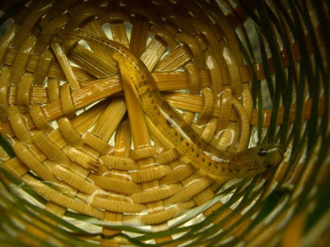 4 món đặc sản châu Á phải ăn sống, nuốt tươi, Việt Nam cũng góp mặt 1 món - Ảnh 11.