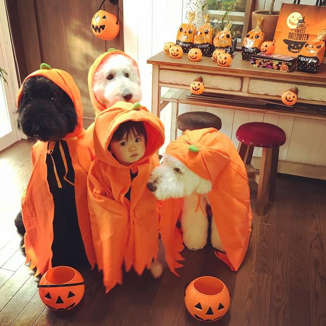 Loạt ảnh hóa trang Halloween hoành tráng nhất mạng xã hội của bé gái Nhật và những người bạn thú cưng - Ảnh 11.