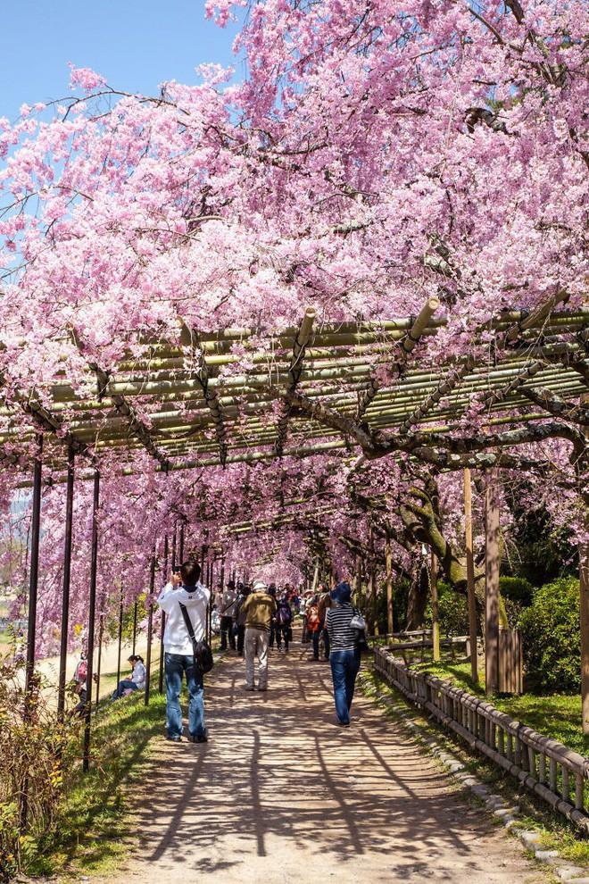 Những con đường phủ đầy hoa tươi như trong truyện cổ tích - Ảnh 11.