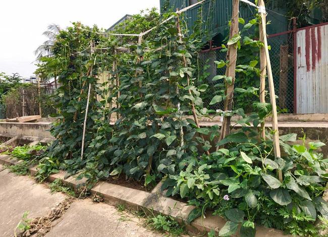 Khoét lỗ bê tông trồng rau: Hà thành sánh cùng Hà Giang - Ảnh 12.