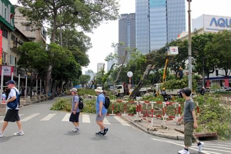 Bắt đầu đốn hạ hàng cây xanh trên đường Lê Lợi - Ảnh 11.