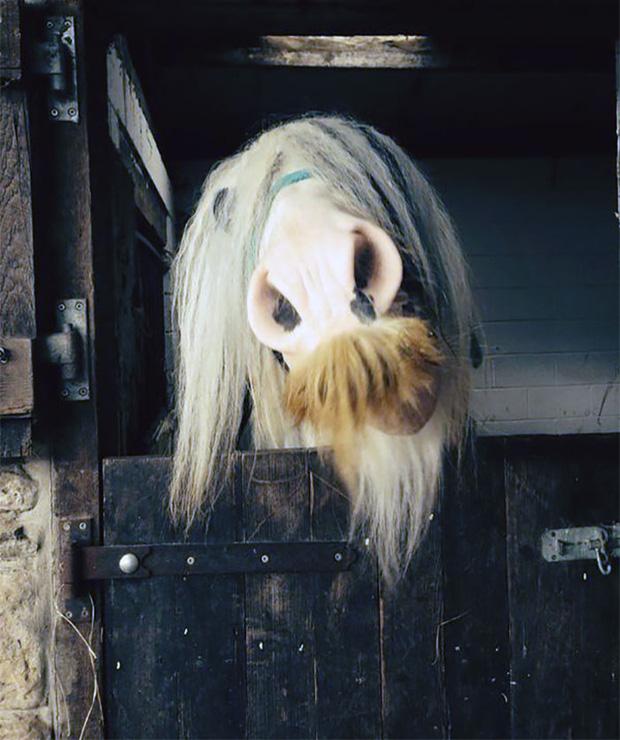14 chú ngựa trông thật menly khi mọc râu - Ảnh 14.
