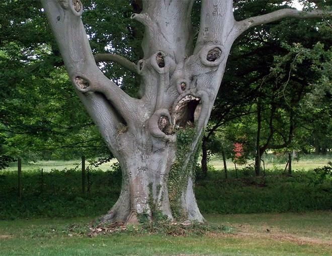 18 hình ảnh khiến bạn phải giật mình khi nhìn vào những cây cổ thụ - Ảnh 12.