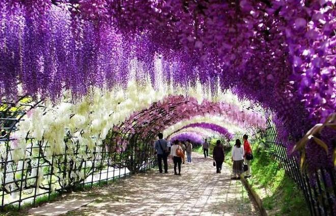 Những con đường phủ đầy hoa tươi như trong truyện cổ tích - Ảnh 12.