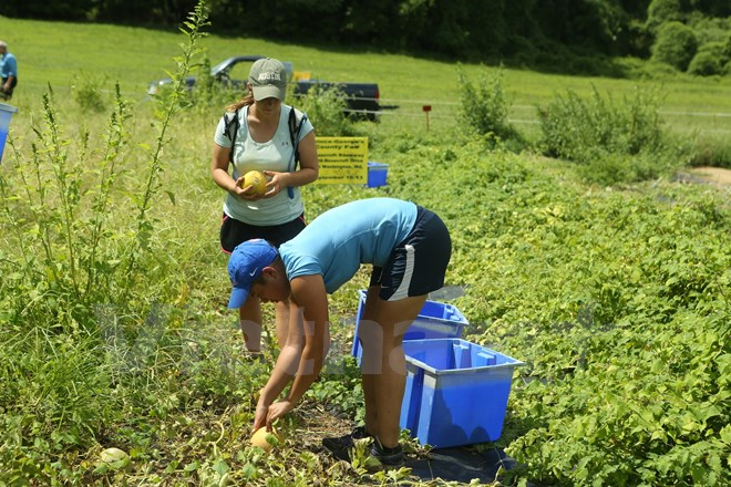 Bài 4: Trang trại cộng đồng giúp người Mỹ giải bài toán thực phẩm sạch - Ảnh 14.