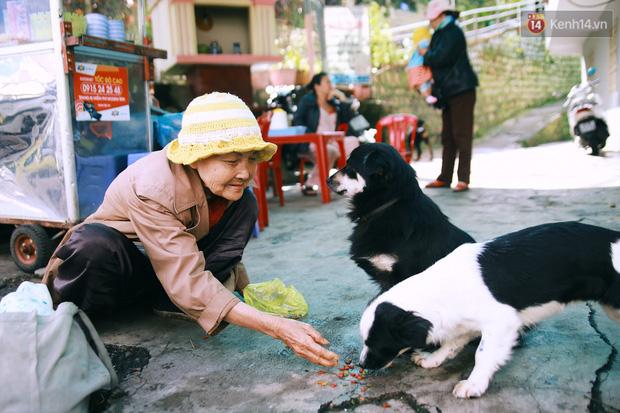 Hồng nhan thời trẻ nhưng về già chẳng chồng con, cụ bà 83 tuổi bầu bạn với thú hoang nơi phố núi Đà Lạt - Ảnh 14.