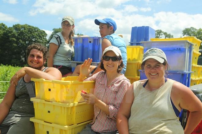 Bài 4: Trang trại cộng đồng giúp người Mỹ giải bài toán thực phẩm sạch - Ảnh 15.