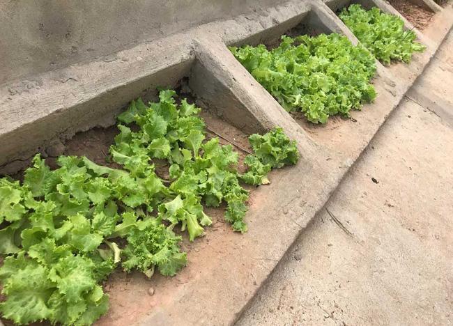 Khoét lỗ bê tông trồng rau: Hà thành sánh cùng Hà Giang - Ảnh 14.