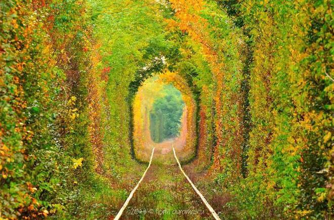 Những con đường phủ đầy hoa tươi như trong truyện cổ tích - Ảnh 15.