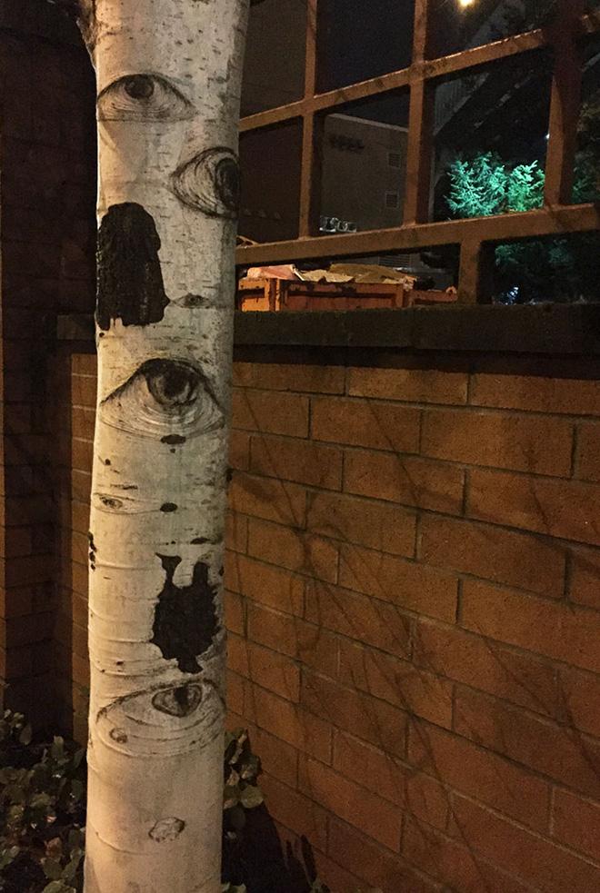18 hình ảnh khiến bạn phải giật mình khi nhìn vào những cây cổ thụ - Ảnh 16.