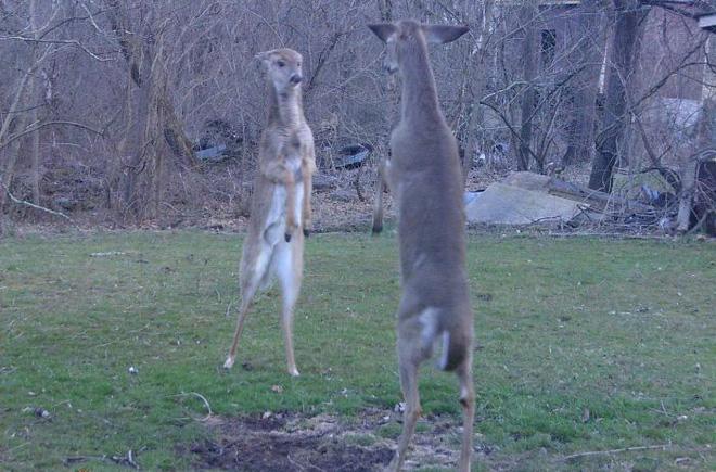 Đặt máy quay lén động vật, thợ săn bất ngờ khi thấy những hành vi kỳ lạ của chúng - Ảnh 18.