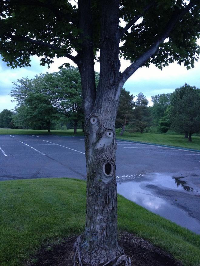18 hình ảnh khiến bạn phải giật mình khi nhìn vào những cây cổ thụ - Ảnh 17.
