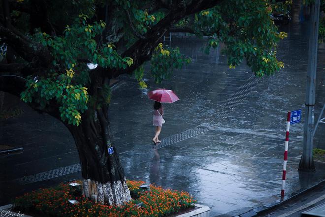 Những bức ảnh tuyệt đẹp này sẽ khiến bạn nhận ra, trong mưa, cuộc đời vẫn dịu dàng đến thế - Ảnh 18.