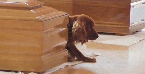 Những mẩu chuyện về chú chó trung thành khiến bạn phải bật khóc - Ảnh 10.