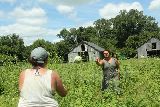 Bài 4: Trang trại cộng đồng giúp người Mỹ giải bài toán thực phẩm sạch - Ảnh 4.