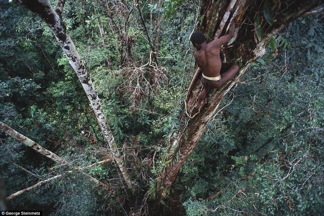 Sống trên những ngôi nhà cây cao tới 50m, bộ lạc bí ẩn khiến nhiều người khâm phục sức sống phi thường - Ảnh 3.