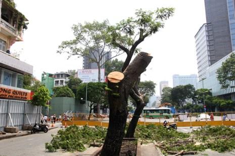 Bắt đầu đốn hạ hàng cây xanh trên đường Lê Lợi - Ảnh 2.