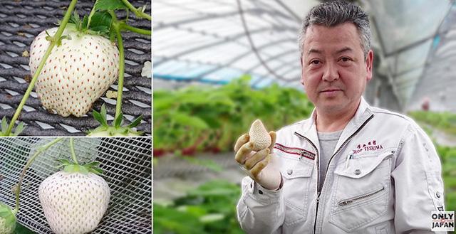 Có gì bên trong dâu tây trắng khổng lồ 200.000 đồng/quả độc nhất vô nhị tại Nhật Bản? - Ảnh 3.