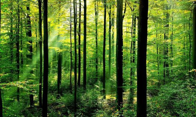 Trồng 66 triệu cái cây trong vòng 12 tiếng? Kỷ lục chỉ một dân tộc trên thế giới làm được - Ảnh 2.
